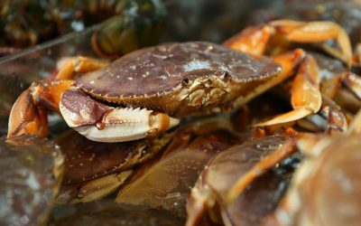 Traditional Norfolk Recipes